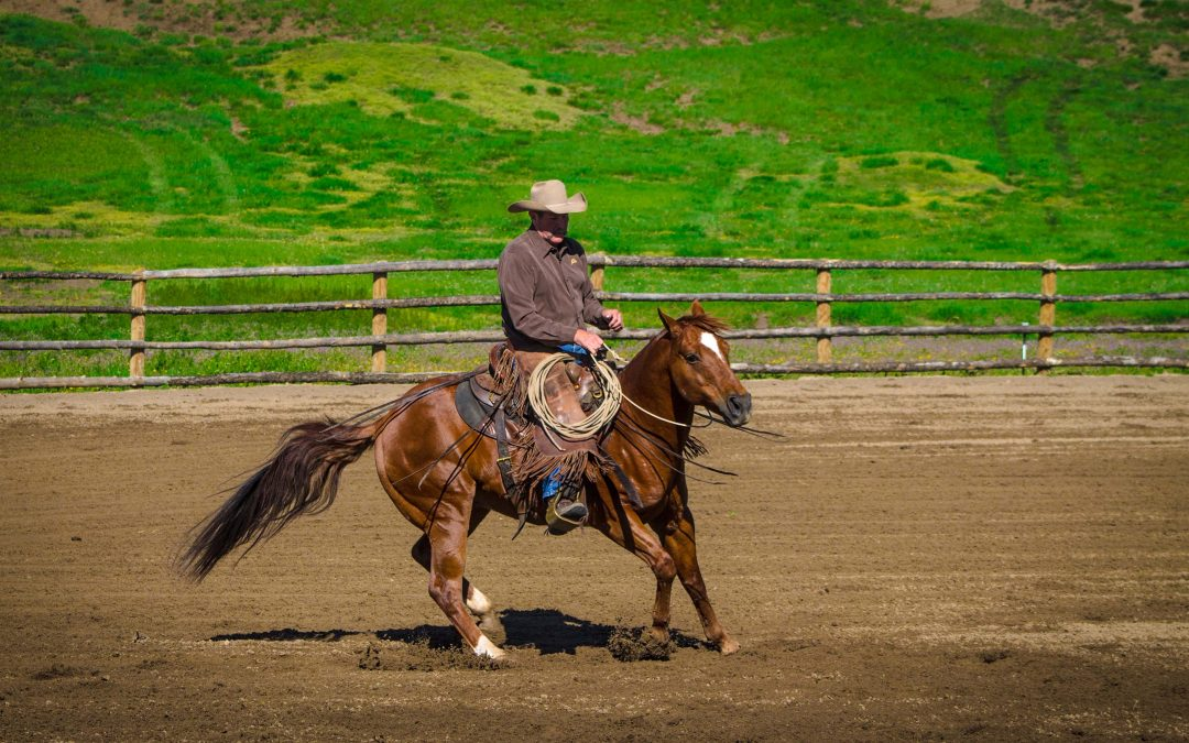A strong foundation in horsemanship