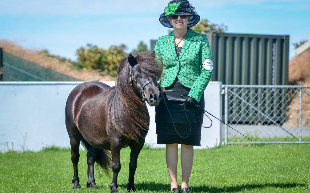 Shetland Pony of the Year! by Catherine Crosado, NZ