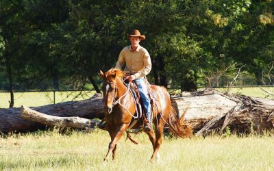 Sam Caporn, 4 Star Parelli Instructor & Horse Development Specialist