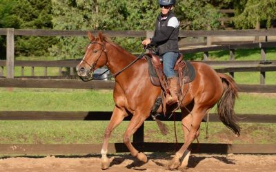 Investing my time horsemanship at Parelli Centre Australia!