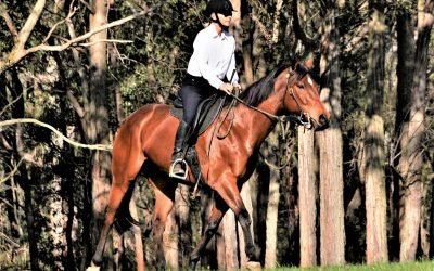 Horse sense – can I learn to think more like a horse? by Susan Shoemark