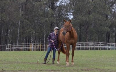 Two Weeks at The Parelli Horsemanship Centre Australia  By Sharon Perkins, NSW
