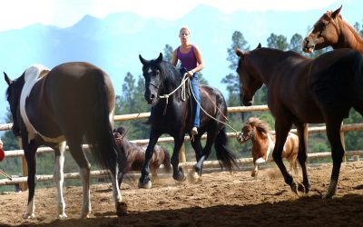 Pat Parelli's Eight Principles of Horsemanship