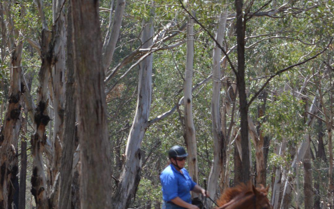 Advancing your Horsemanship ~ Rider's Blueprint Clinic, Part 2. 18-19 July 2020