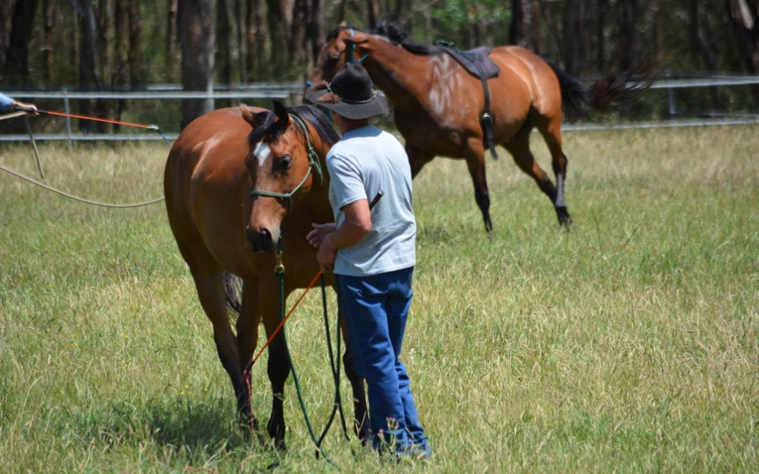 Level 1 Introductory Horsemanship Clinic, June 26-27, 2021