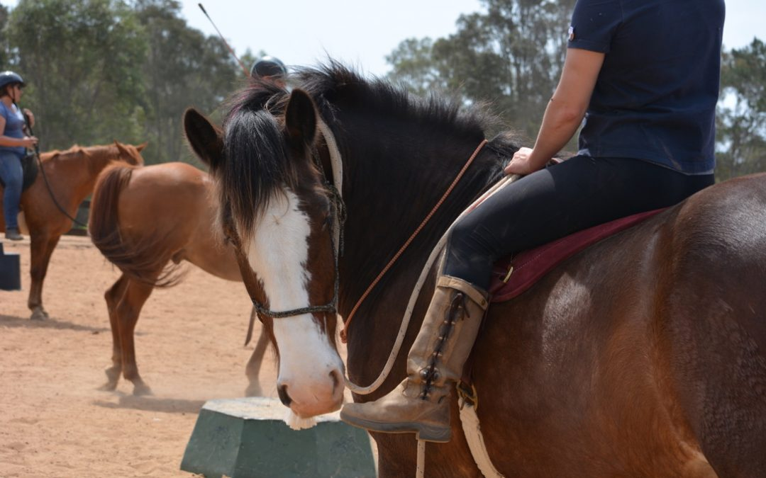 Horsemanship Breakthrough & Problem Solving Clinic, June 12-13 2021