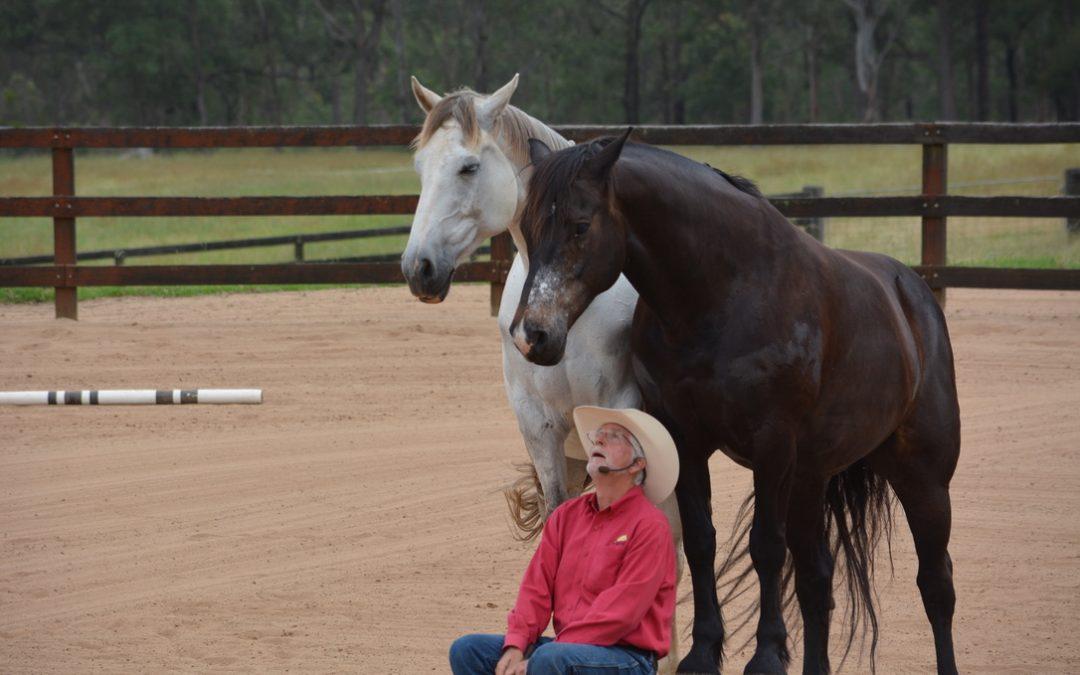 2020 The year of Horsemanship!